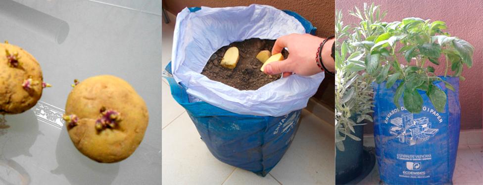 Lombrico garden for Como cultivar patatas